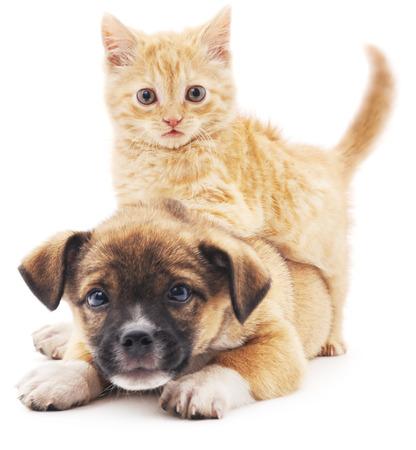 Rode kitten en puppy die op een witte achtergrond.