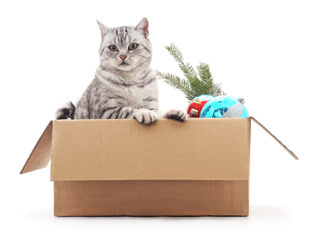 box: Cat in a box with Christmas decorations on a white background. Stock Photo