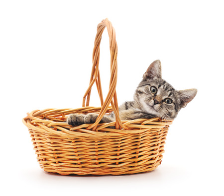 Kitten in a basket isolated on a white background.