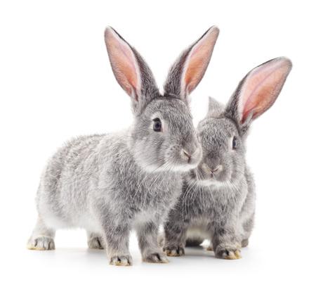Grey baby rabbits on a white background. Stock Photo