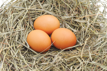 straw twig: Three eggs in a nest of hay. Stock Photo