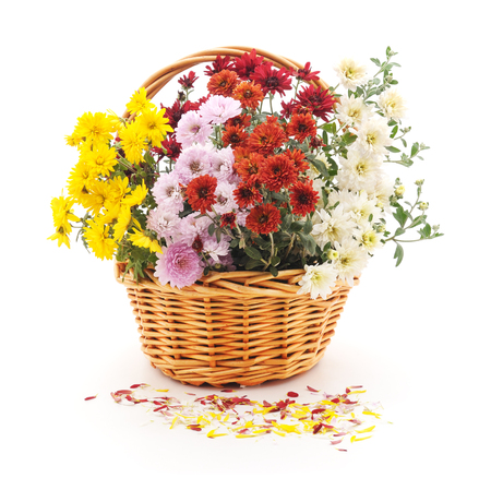 spring leaf: Colorful bouquet of chrysanthemums on a white background.