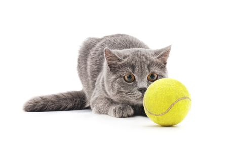 Cat with a ball  on a white background.