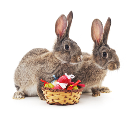 baby cute: Easter basket and rabbits on a white background.