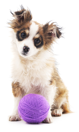 shaggy: Shaggy dog with purple balls isolated on a white background.