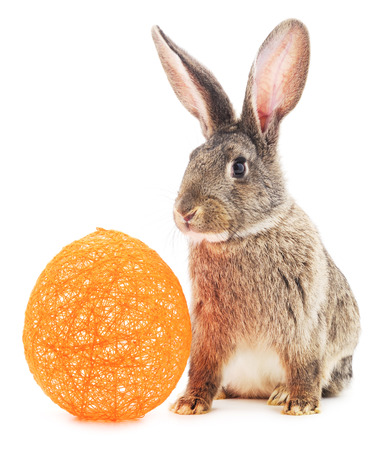 bunny xmas: Rabbit with orange ball isolated on a white background. Stock Photo