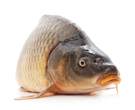 fish isolated: Fresh  fish isolated on a white background.