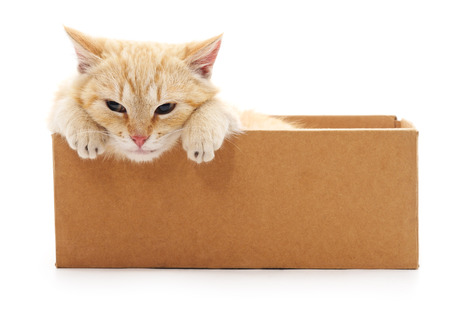 Red kitten in a box isolated on a white background.