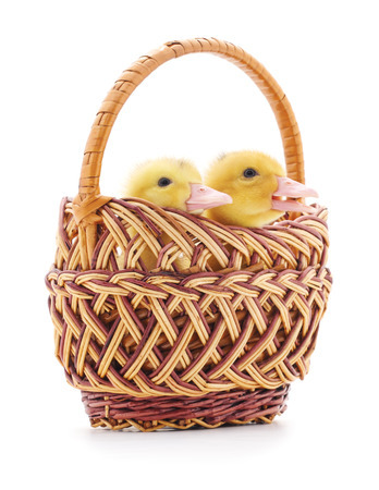 two ducks: Two ducks in a basket isolated on a white background.