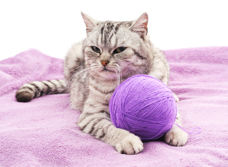 coverlet: Cat with a ball on the violet coverlet.