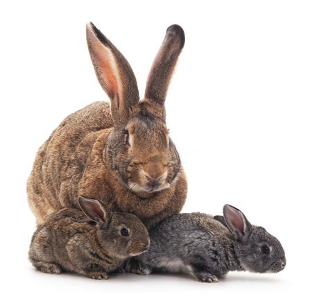 Mother and children rabbits on a white background. Standard-Bild