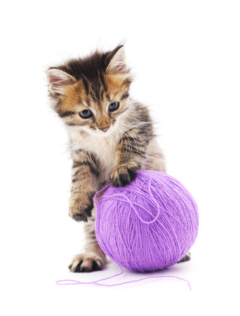 merriment: Cat with a ball  on a white background.