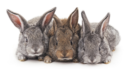Grau und Braun Baby-Kaninchen auf einem weißen Hintergrund. Standard-Bild - 56949394