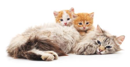 Deux chatons avec un chat isolé sur un fond blanc.