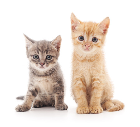 Two small kittens isolated on a white background. Standard-Bild
