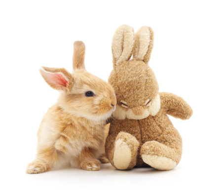 Little rabbit and toy rabbit on a white background. Stock Photo