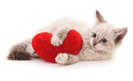 White cat and red heart isolated on a white background.