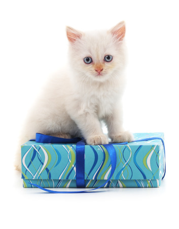 White cat and Christmas gift isolated on a white background.