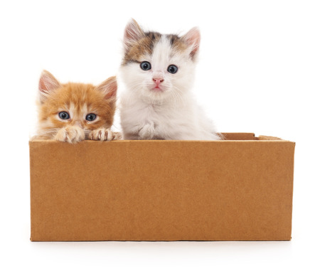 Two cats in a box isolated on white background.