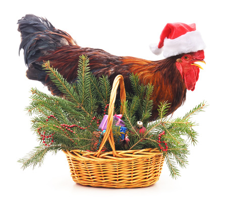 Rooster near a basket with a tree isolated on a white background.