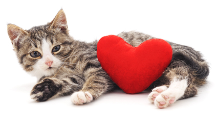 Gray kitten and red heart isolated on a white background. Foto de archivo