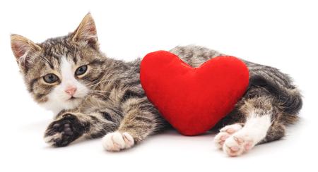 Graues Kätzchen und rotes Inneres getrennt auf einem weißen Hintergrund. Standard-Bild - 67382903