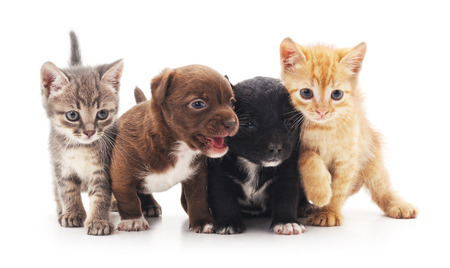 Kittens and puppies isolated on a white background. Stock Photo - 67385315