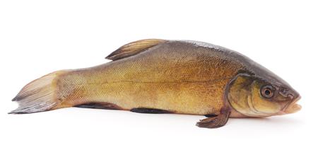 Big carp isolated on a white background. Stock Photo