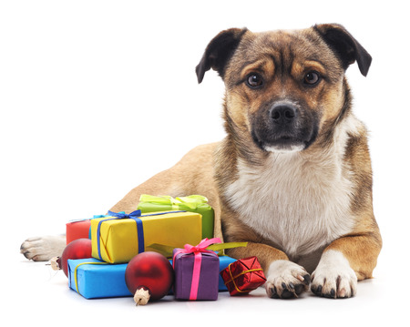 Puppy with gifts isolated on a white background.