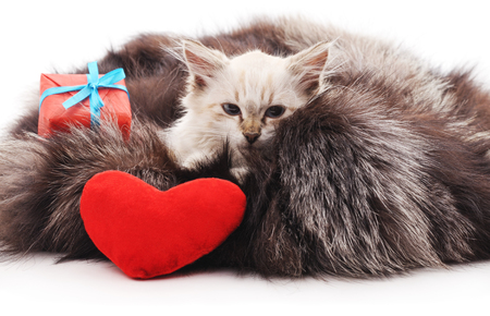 Kitten in a fur coat with a gift and toy heart.