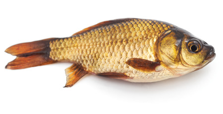 Little crucian isolated on a white background.