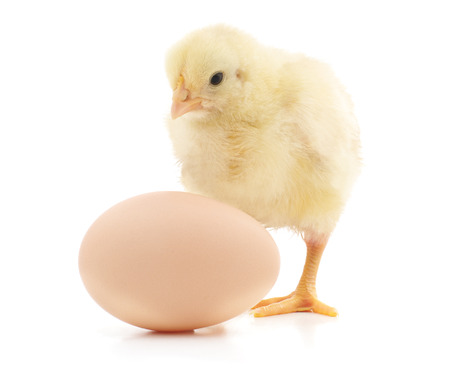 Chicken and egg isolated on a white background. Standard-Bild