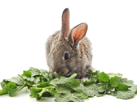 ration: Young rabbit greens on a white background.