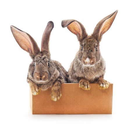 Rabbits in the box on a white background. Stock Photo
