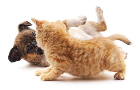 sound bite: Kitten that screams at puppy isolated on white background. Stock Photo