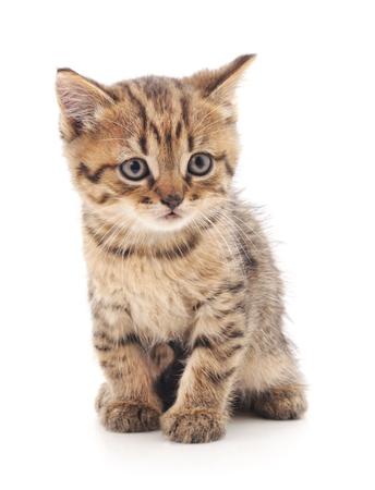 pequeño gatito aislado en un fondo blanco .