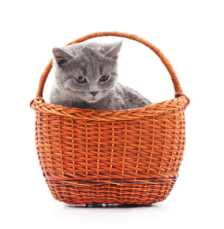 grey cat: Gray cat in basket isolated on a white background. Stock Photo