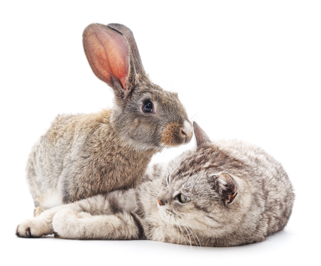 Cat and rabbit isolated on a white background. Stock Photo