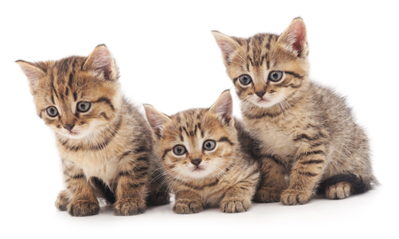 Three little kittens isolated on the white background.