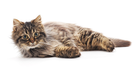 Beautiful cat isolated on a white background.