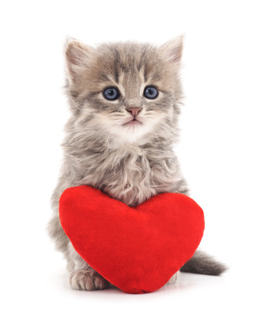 Kitten with toy heart isolated on a white background.