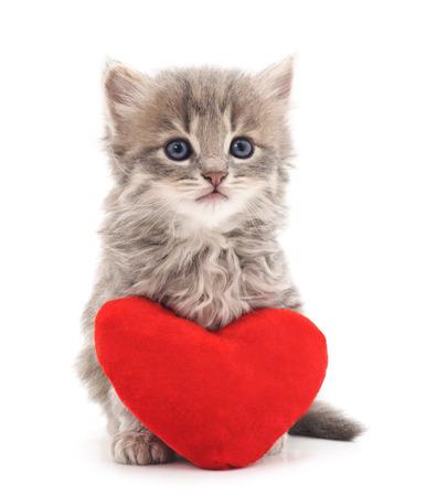 Katje met stuk speelgoed hart dat op een witte achtergrond wordt geïsoleerd.