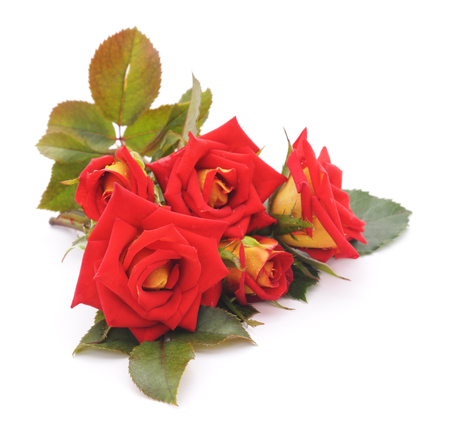Red roses isolated on a white background. Imagens - 80048154