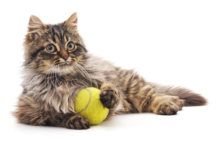 Brown cat and yellow ball isolated on a white background.