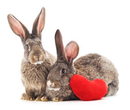Two rabbits and heart isolated on a white background. Stock Photo