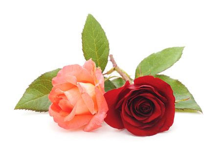 Red and roses isolated on a white background.