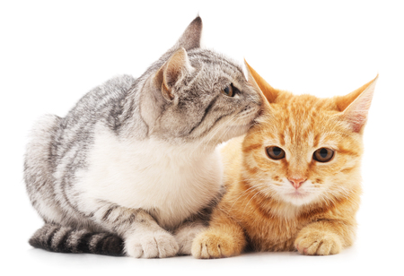 Two little kittens isolated on a white background.