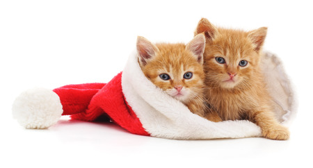 Kittens in Christmas hat isolated on a white background. Stock Photo