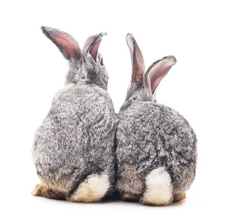Grey baby rabbits on a white background. Фото со стока