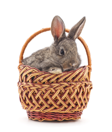 lapin: Little bunny in a basket on a white background. Banque d'images